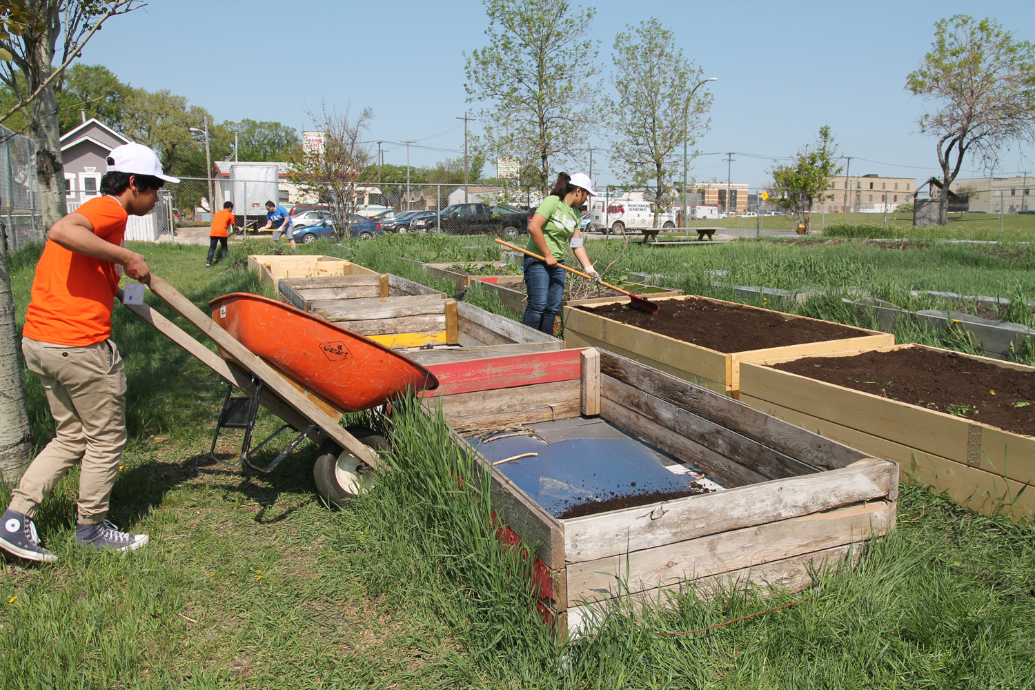 Youth helped prepare garden beds for newcomers at the Dufferin School Community Garden